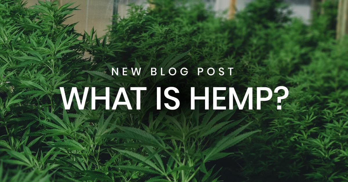 What is hemp